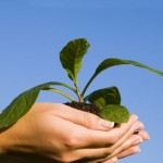 yourbusiness-and-the-environment